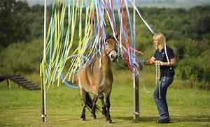 Podest Pferd Selber Bauen : vertrauen und geduld bringt erfolg pferdewoche online ~ Yasmunasinghe.com Haus und Dekorationen