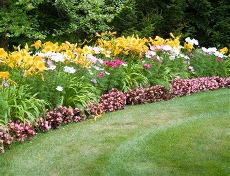 fiori da giardino perenni foto piante da fiore perenni piante perenni piante da fiore