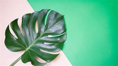 Plant Aesthetic Monstera Leaf Laptop Cheese Swiss