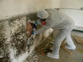 How To Remove Odor From Basement by The Truth About Mold Removal And Mold Remediation Moldmanusa