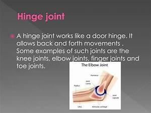 hinge joint examples - DriverLayer Search Engine