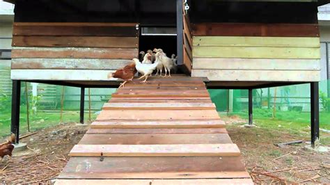 building  coop  raise  range chickens youtube
