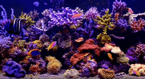 Animated Aquarium Wallpaper Gif - aquarium gif find on giphy