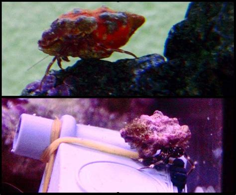 bernard l hermite aquarium eau douce mon 1er aquarium r 233 cifal forum poissons r 233 cifaux