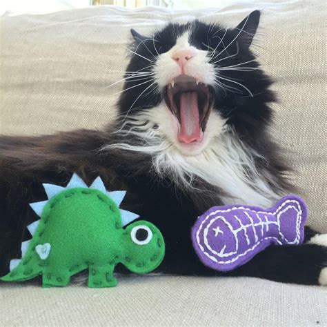 catastic homemade cat toy diyideacentercom