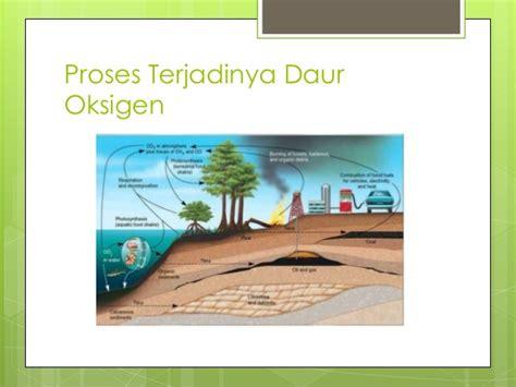 presentasi daur oksigen