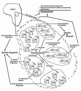 Ecological Levels  From Individuals To Ecosystems