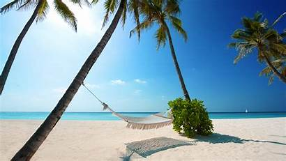 Palm Hammock Beach Trees Between Suspended Umbrella