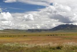 Temperate Grassland Bi...