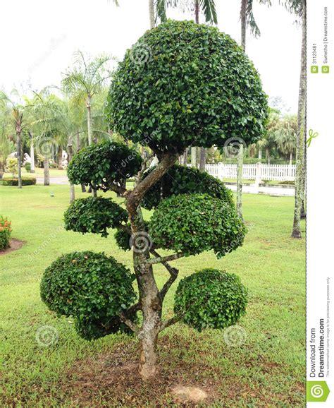 schlagzeug teppich bäume für den garten frische haus ideen