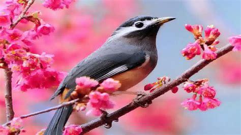 Beautiful Birds Wallpapers Youtube