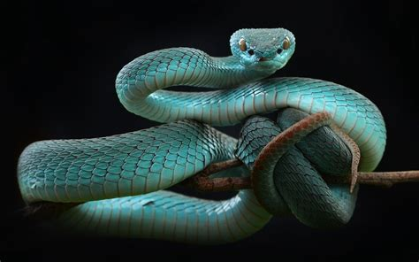 Snake, Animals, Reptiles Hd Wallpapers / Desktop And