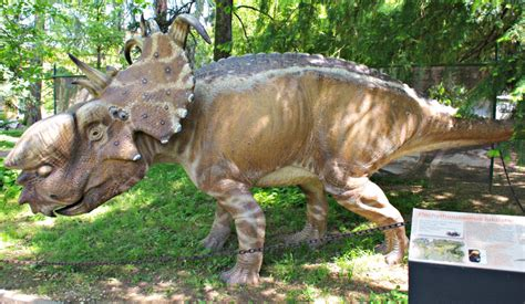 pachyrhinosaurus facts  pictures