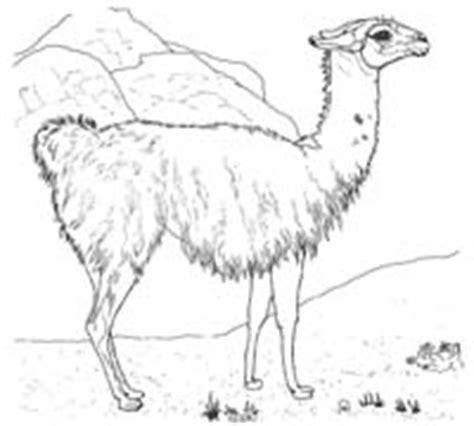 kamele  mellvil ein kinderforum zum klarkommen