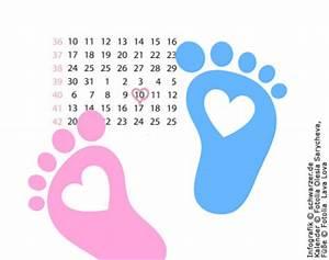 Ssw Berechnen Mit Tagen : 8 schwangerschaftswoche ssw so gro wie ein daumennagel ~ Themetempest.com Abrechnung