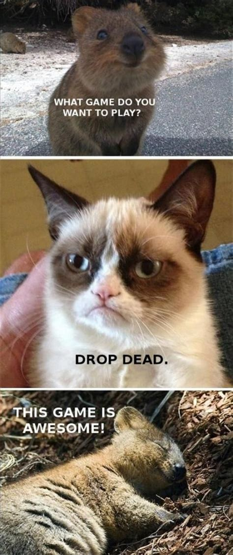 195 Best ^^ Grumpy Cat ^^ Images On Pinterest