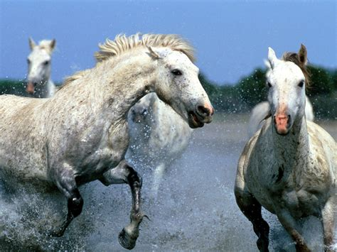 animals zoo park horses wallpapers  desktop