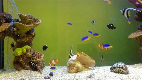 colorful marine aquarium fish species youtube