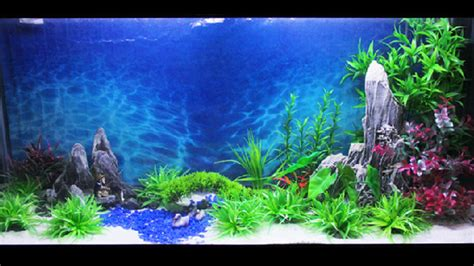 aquarium decor de fond 15m length aquarium wallpaper fish tank background picture background painting alex nld