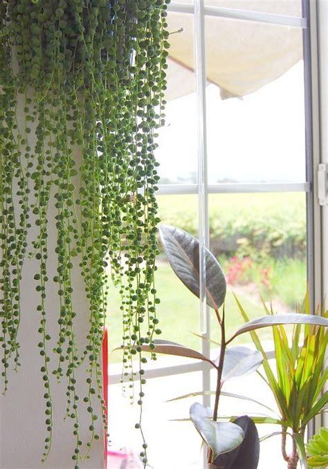 cascading succulent plants diy houseplants this is cooler than it sounds i promise