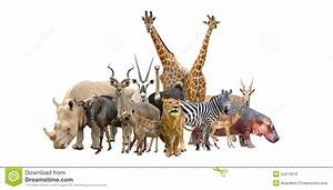 Group Of Wild Animals Together