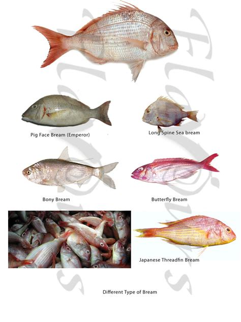 singapore fish    fish types  fish food