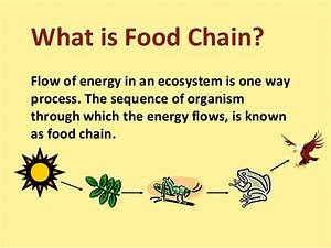 Illustrate A Simple Food Chain