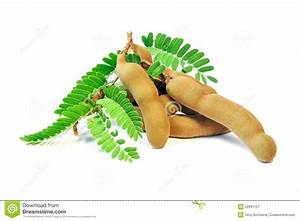 Fresh Tamarind With Leaves On White Background. Stock ...