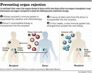 Stem Cells Can Potentially Prevent Organ Transplant ...