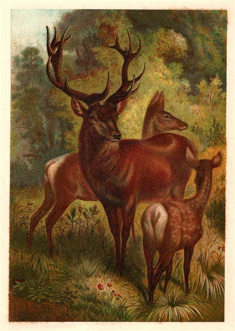 images  vintage animal prints  pinterest