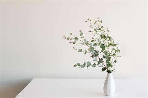 eucalyptus decorating ideas   healthy home