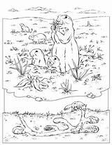 Murmeltier Marmotte Marmotta Malvorlage Ausmalbilder Chimps Burrow Prairiedog Coloriages Ausdrucken Insegnante Colorear Dogs Designlooter Ossos Vertebrat Neix Panxa sketch template
