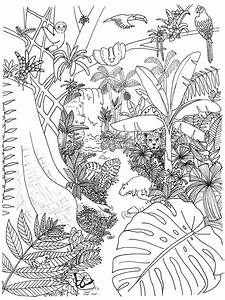 Rainforest Animals And Plants Coloring Page