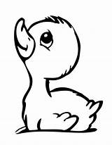 Coloring Duckling Duck Drawings Animal Tattoos Rubber Ducky Printable Silhouette Body sketch template