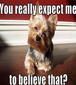Cute Funny Dog Pictures With Captions