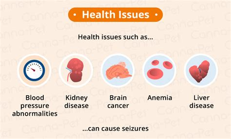 What Can Cause Epilepsy Seizure