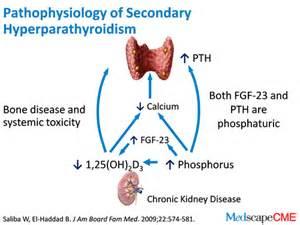 Hyperparathyroidism, Secondary Hyperparathyroidism