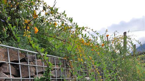 giardino terrazzato giardino terrazzato