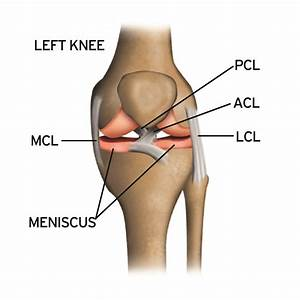 Diagram Of Torn Acl : stack science how knee injuries occur and how to prevent ~ A.2002-acura-tl-radio.info Haus und Dekorationen