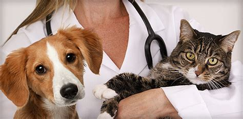 Home  La Sierra Veterinary Clinic