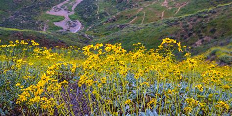 walker canyon project ecological reserve