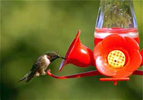 bee guards for hummingbird feeders pet pinch waist glass hummingbird