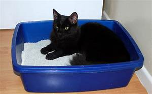 Litiere Chat Fermée : la liti re de son chat laquelle comment la choisir ~ Melissatoandfro.com Idées de Décoration