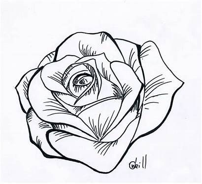 Rose Cartoon Cliparts Drawing Drawings Pencil Hearts