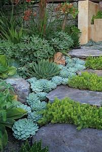 les 25 meilleures idees de la categorie plantes grasses With modeles de rocailles jardin 2 crassula planter et entretenir ooreka