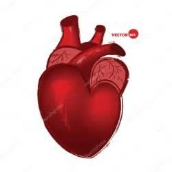 Real Human Heart Drawing