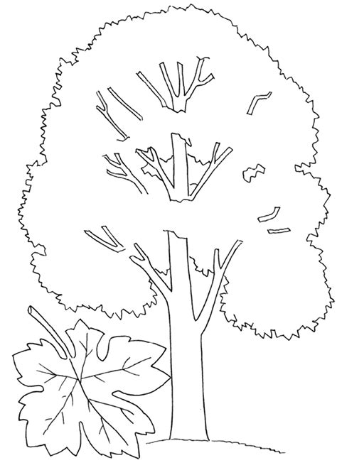 Coloring Pages For by Maple Coloring Pages To And Print For Free