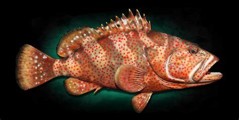 grouper mounts hind fish strawberry mount shark mako replica taxidermy replicas homestead marinecreations