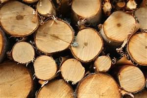 Gewicht Holz Berechnen : gewicht von buchenholz wissenswertes aus dem wald ~ Themetempest.com Abrechnung