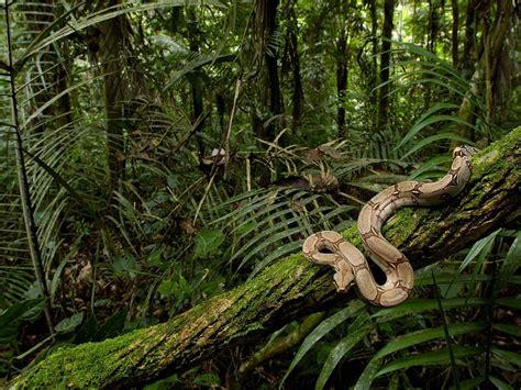 Rainforest Animals Wallpaper - wallpapers for gt rainforest background jungle